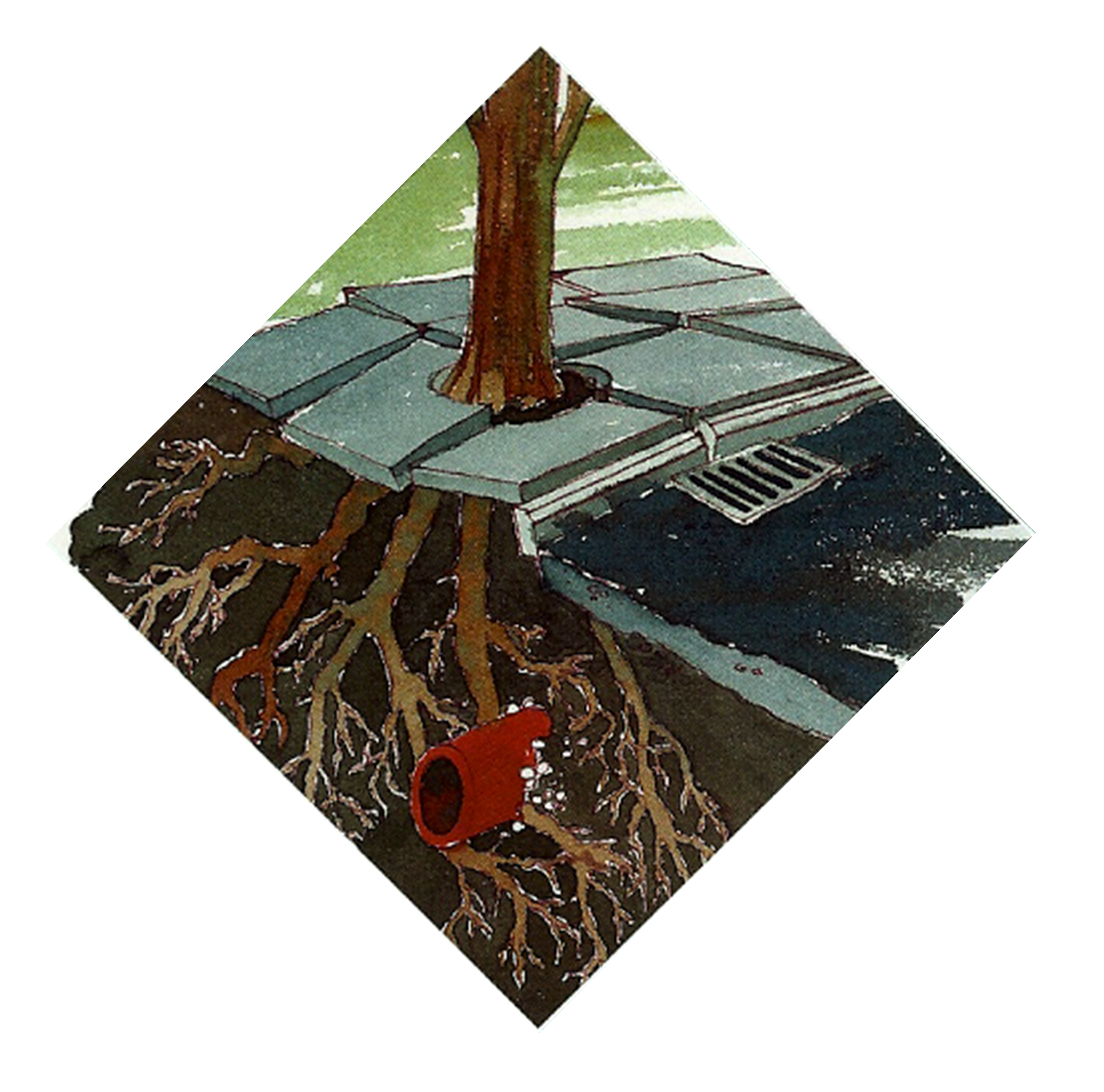 Spreading Tree Roots